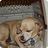 Adopt A Pet :: Cheerio - Sugarland, TX