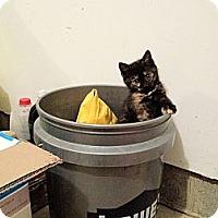Adopt A Pet :: Monkey - Xenia, OH