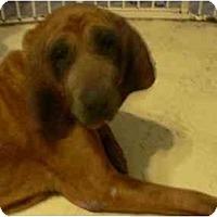 Adopt A Pet :: Sunshine - Carrollton, GA