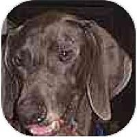 Adopt A Pet :: Wilbur  **ADOPTED** - Eustis, FL
