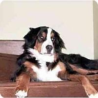 Adopt A Pet :: Emile - Rigaud, QC