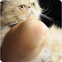 Adopt A Pet :: Desire