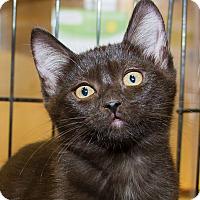 Adopt A Pet :: Cosima - Irvine, CA