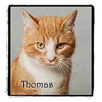 Adopt A Pet :: Thomas - Warren, PA