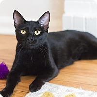 Adopt A Pet :: Deja vu - Chicago, IL
