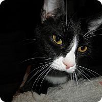 Adopt A Pet :: Flint - Milwaukee, WI