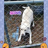 Pointer Mix Dog for adoption in Ravenna, Texas - Scout