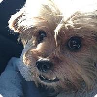 Adopt A Pet :: Hercules - Austin, TX