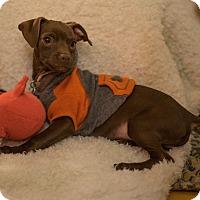 Adopt A Pet :: Cinna - San Francisco, CA