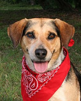 Hound (Unknown Type) Mix Dog for adoption in Pipe Creed, Texas - Ginnie