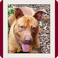 Adopt A Pet :: Rudy-Courtesy Listing - Memphis, TN