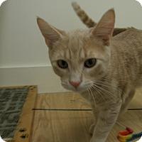 Adopt A Pet :: Clipper - Milwaukee, WI