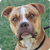 Adopt A Pet :: RUSTY:Low Fees: Altered - Red Bluff, CA