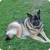 Adopt A Pet :: Delilah (Senior Courtesy Post) - Greeneville, TN