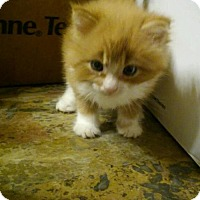 Adopt A Pet :: no names - Melbourne, FL