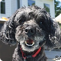 Adopt A Pet :: Bordentown NJ - Sam - New Jersey, NJ