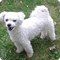 Adopt A Pet :: Theo-adoption pending - Mississauga, ON