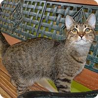 Adopt A Pet :: Ginger - Michigan City, IN