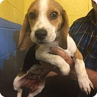 Adopt A Pet :: Gunner - Maysville, KY