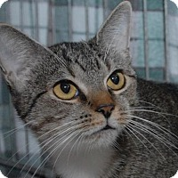 Adopt A Pet :: Macie - Jaffrey, NH