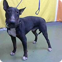 Adopt A Pet :: URGENT 10/23 @ DEVORE - San Bernardino, CA