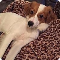 Adopt A Pet :: Perseus - Houston, TX