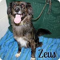 Catahoula Leopard Dog/Pointer Mix Dog for adoption in Melbourne, Kentucky - Zeus