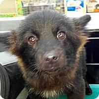 Adopt A Pet :: Jimmy - Fairfax, VA