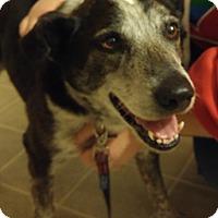 Adopt A Pet :: Molly - Lebanon, ME