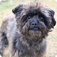Adopt A Pet :: Wicket - Chester Springs, PA
