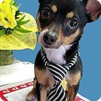 Adopt A Pet :: Flynn - Council Bluffs, IA