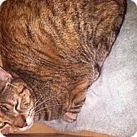 Adopt A Pet :: Lizzy - Clay, NY