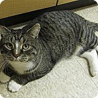 Adopt A Pet :: Ninja - West Dundee, IL