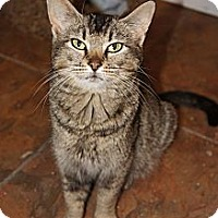 Adopt A Pet :: Pattie - Xenia, OH