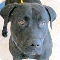 Adopt A Pet :: Thor - Ludington, MI
