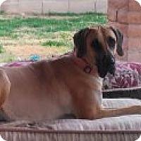 Adopt A Pet :: Maggie McGee - Phoenix, AZ