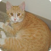 Adopt A Pet :: Gracee - Medina, OH
