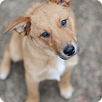 Adopt A Pet :: Benji - Kingwood, TX