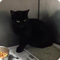 Adopt A Pet :: Eileen - Lancaster, VA