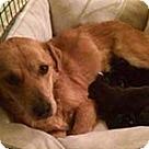 Adopt A Pet :: Brianna's Pup Bristol