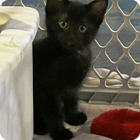 Adopt A Pet :: Webster - Geneseo, IL