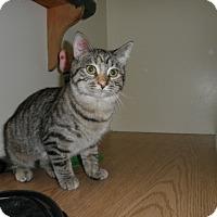 Adopt A Pet :: Gwendolyn - Milwaukee, WI