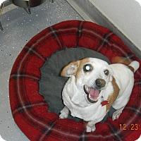 Adopt A Pet :: BELLA - Sandusky, OH