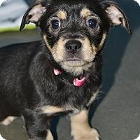 Adopt A Pet :: Frisky - Meridian, ID