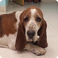 Adopt A Pet :: Gabby (Hudson) - Charleston, SC