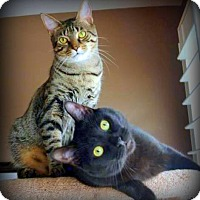 Adopt A Pet :: Nolan (Bonded to Stewart) - Richmond Hill, ON