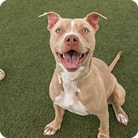 Adopt A Pet :: AMERICA - Martinez, CA