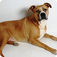 Adopt A Pet :: Apollo - Redding, CA