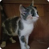 Adopt A Pet :: Honeycomb - Covington, KY