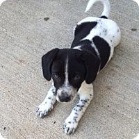 Adopt A Pet :: McDuff - East Sparta, OH
